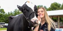 Maddy Gwidt, a sophomore dairy science major from Pulaski, Wisconsin, showed two heifers and two cows.